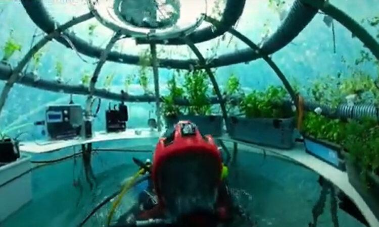 Οι κήποι του Νέμο: Τα θερμοκήπια μέσα στη θάλασσα