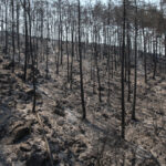 """Οι φωτιές στην Τουρκία ανάβουν το """"φιτίλι"""" της οργής κατά του Ερντογάν"""